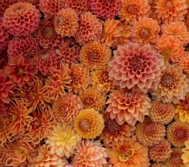 Peach interior design ideas - image by Floret Flowers