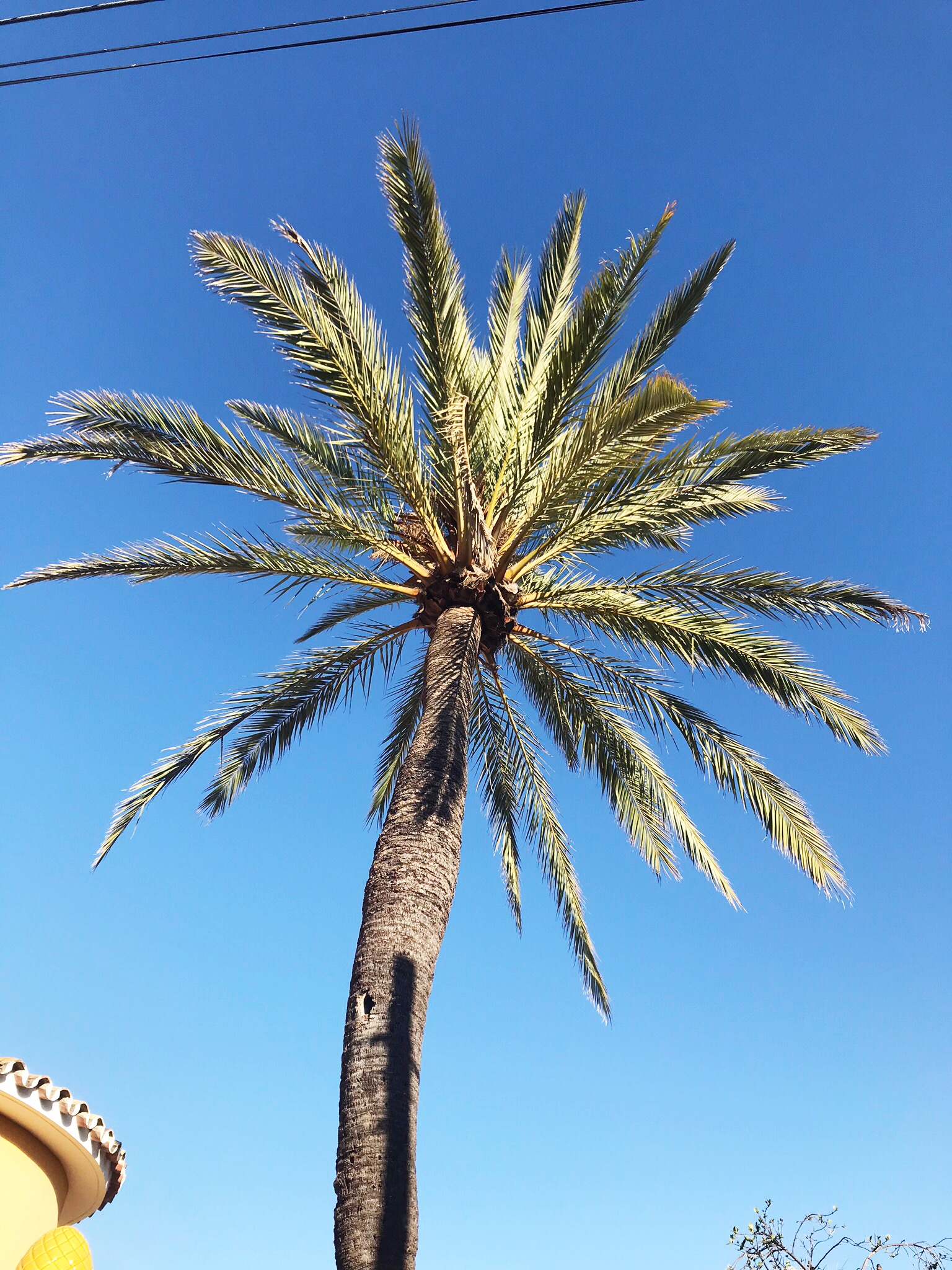 Palm trees in Marbella Spain, colour and pattern inspiration from House Anna