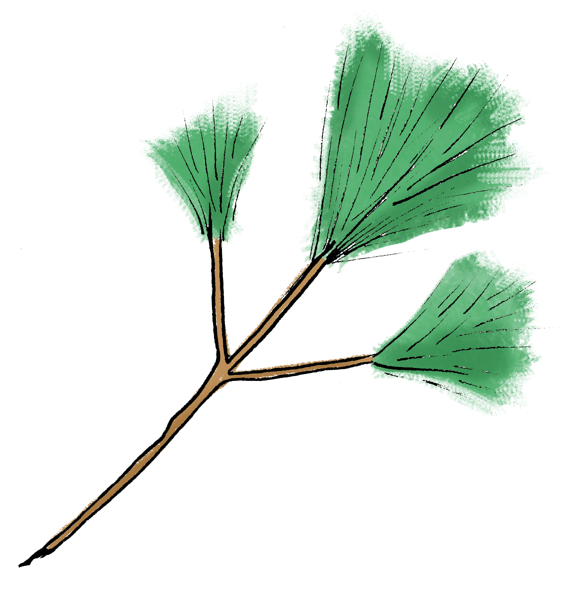 pinetree.jpg