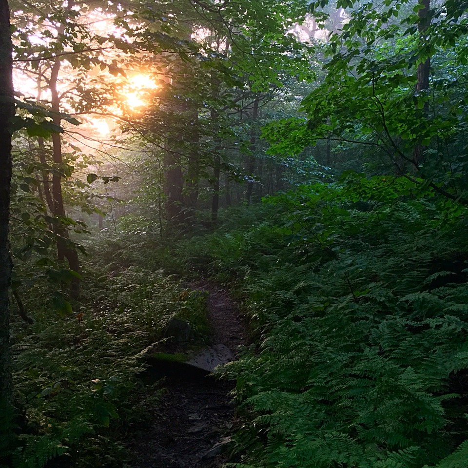 vermont woods.JPG