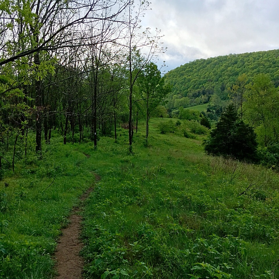 It doesn't look like much in the photo, but I remember taking the picture through joyful tears that welled up as I hiked this stretch in Virginia.