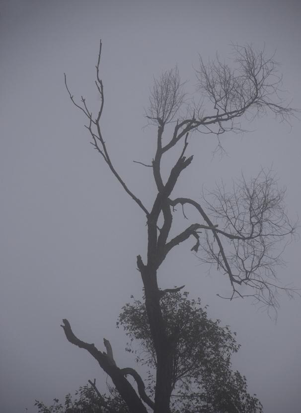 hazy-Col4tumblr.jpg