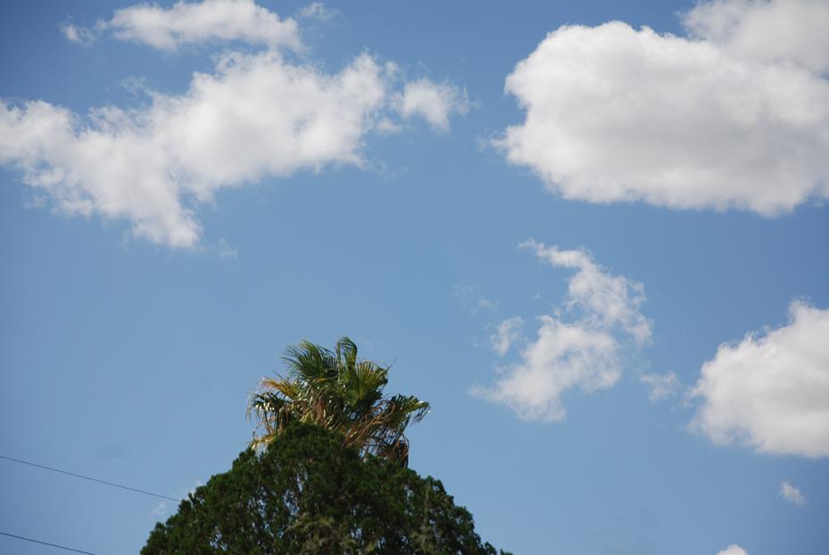hiding.palm0076.jpg