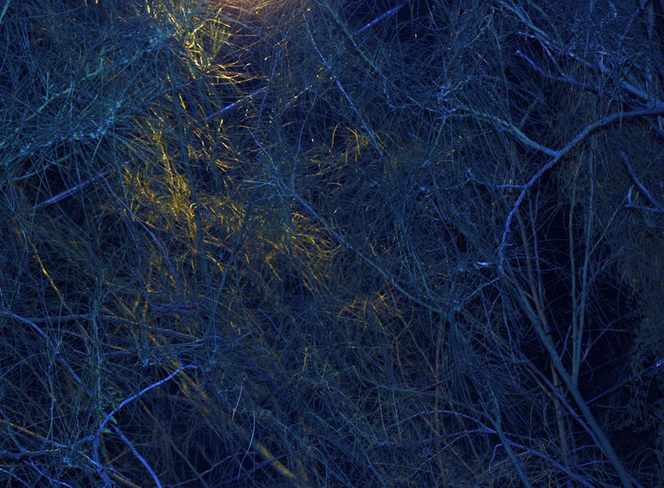 Ultra.night_bushesTumblr2.jpg