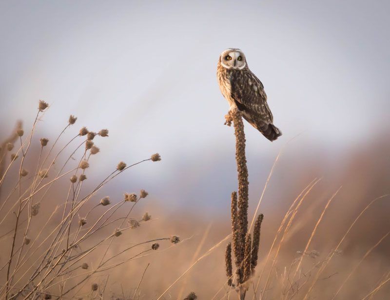 National Geographic Daily Dozen, Best of Show-Honeywell Photography Show