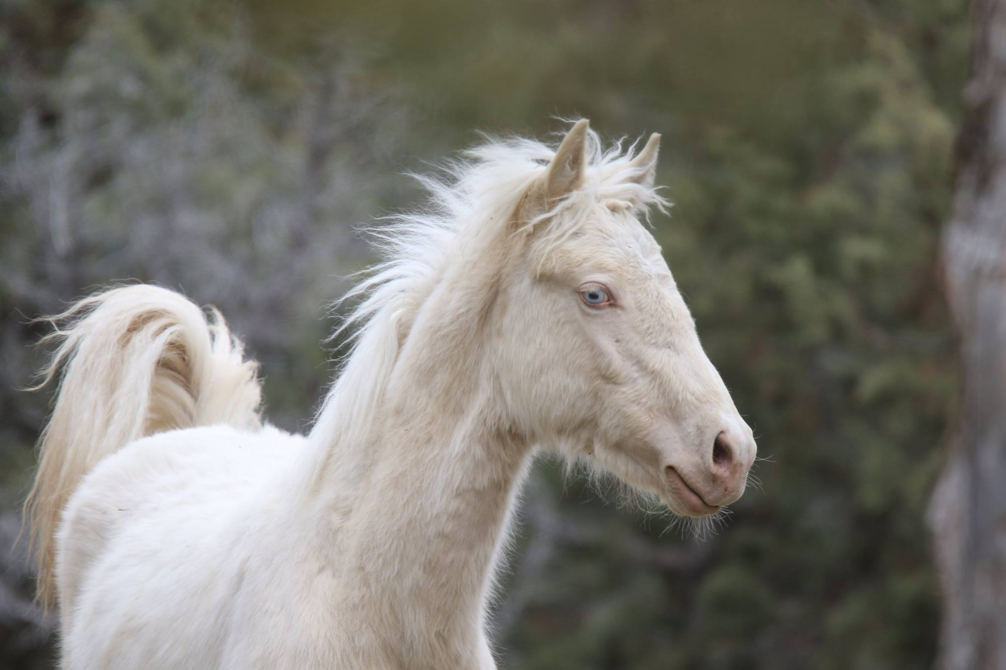 Foals and Yearlings  $40 per month