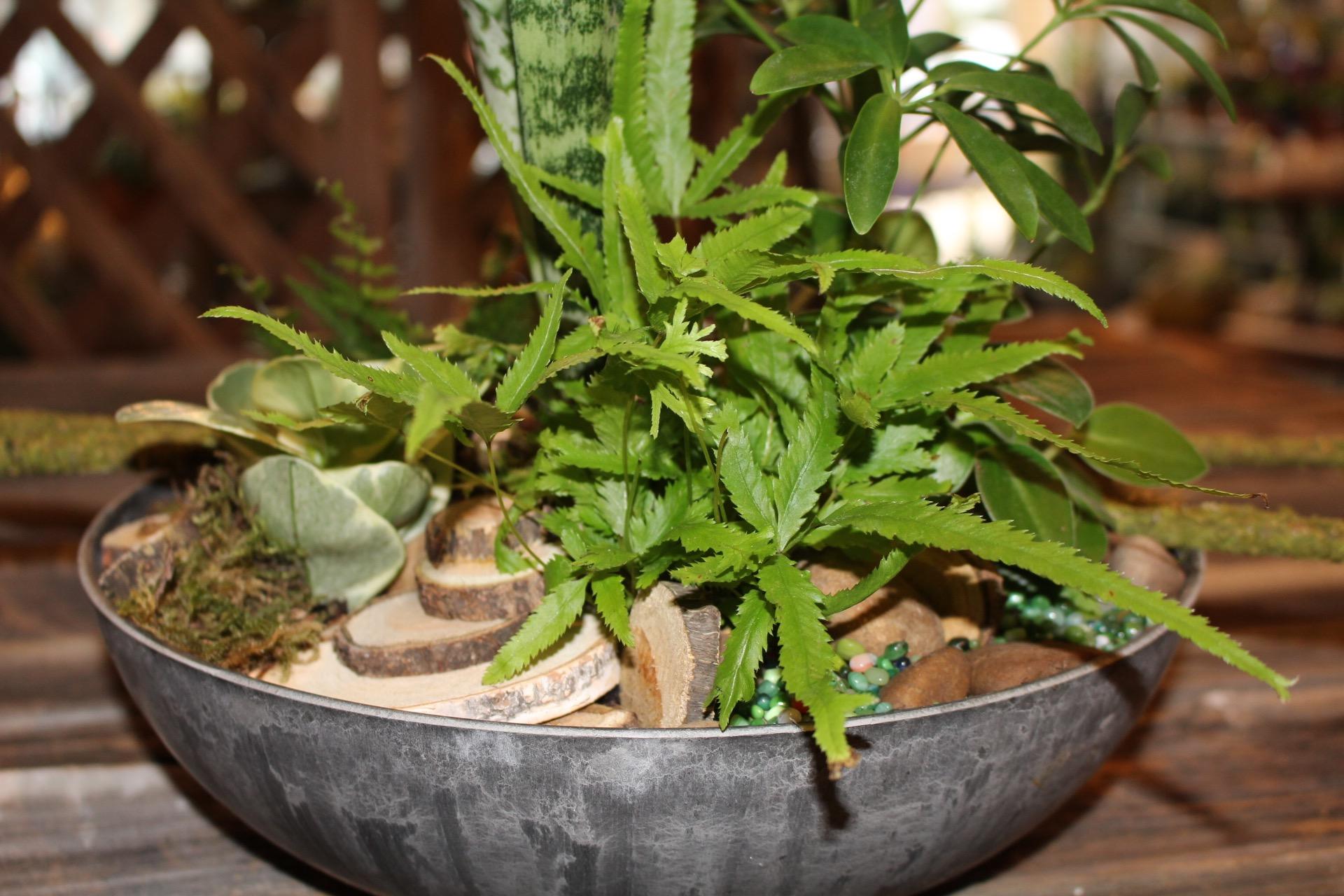 plants3l.jpg