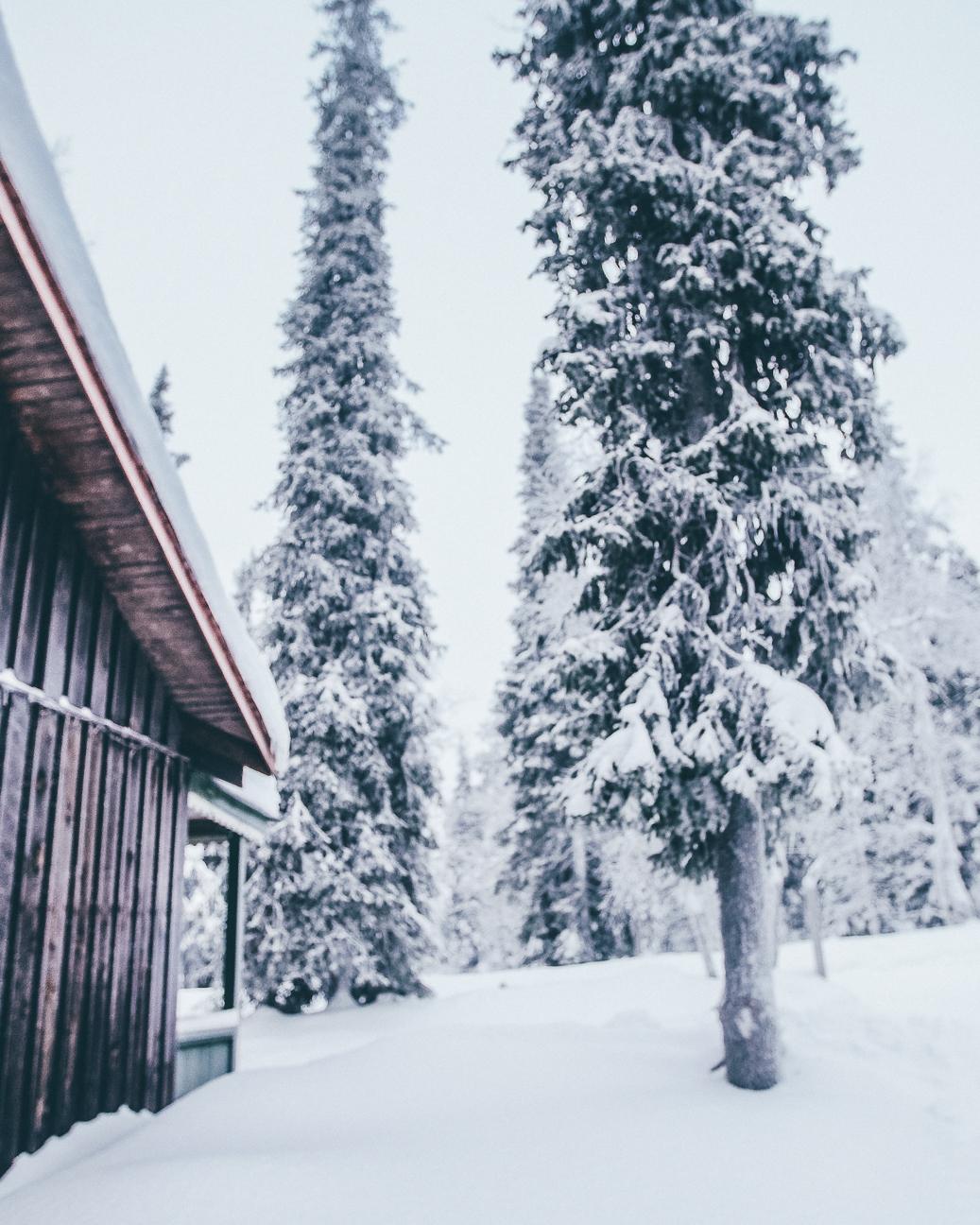winter 2017-6.JPG