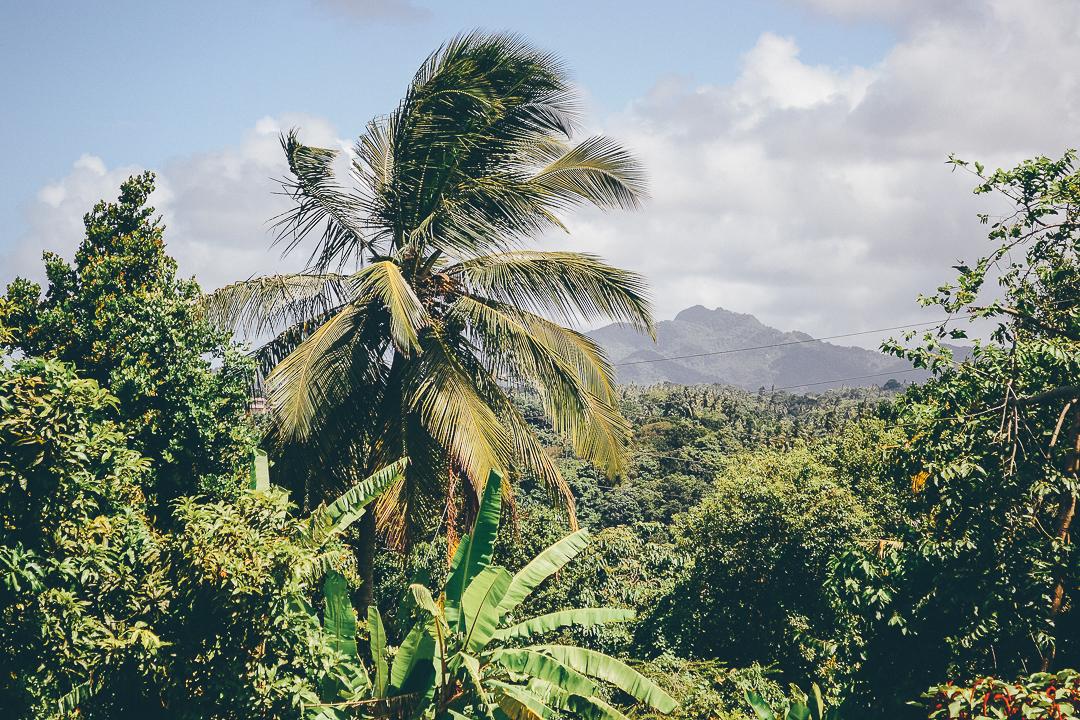 Dominica-1.JPG