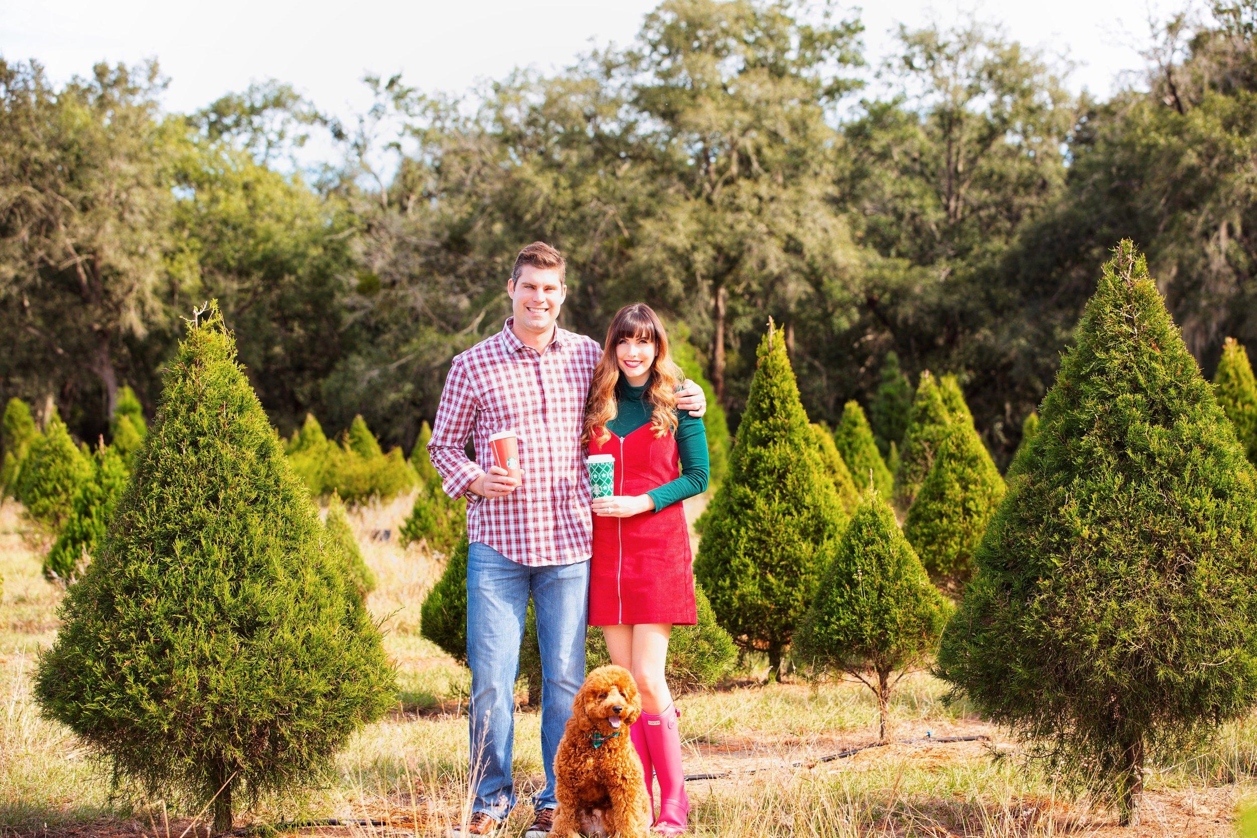 tree farm 2.JPG