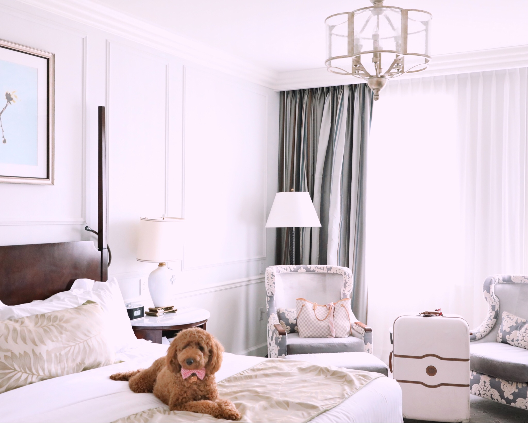 charleston pet friendly hotels.JPG