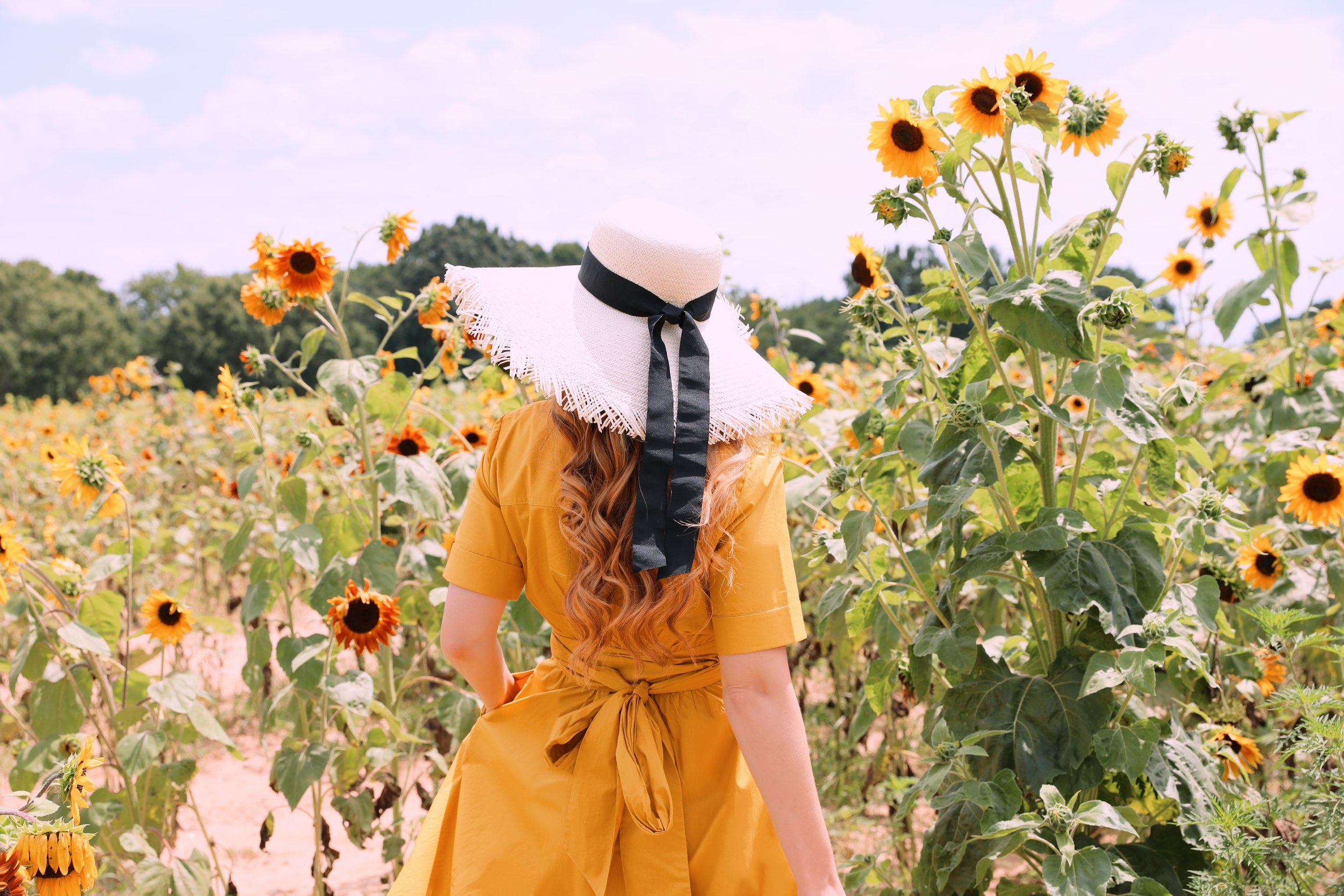 creating your path in sunflowers.JPEG