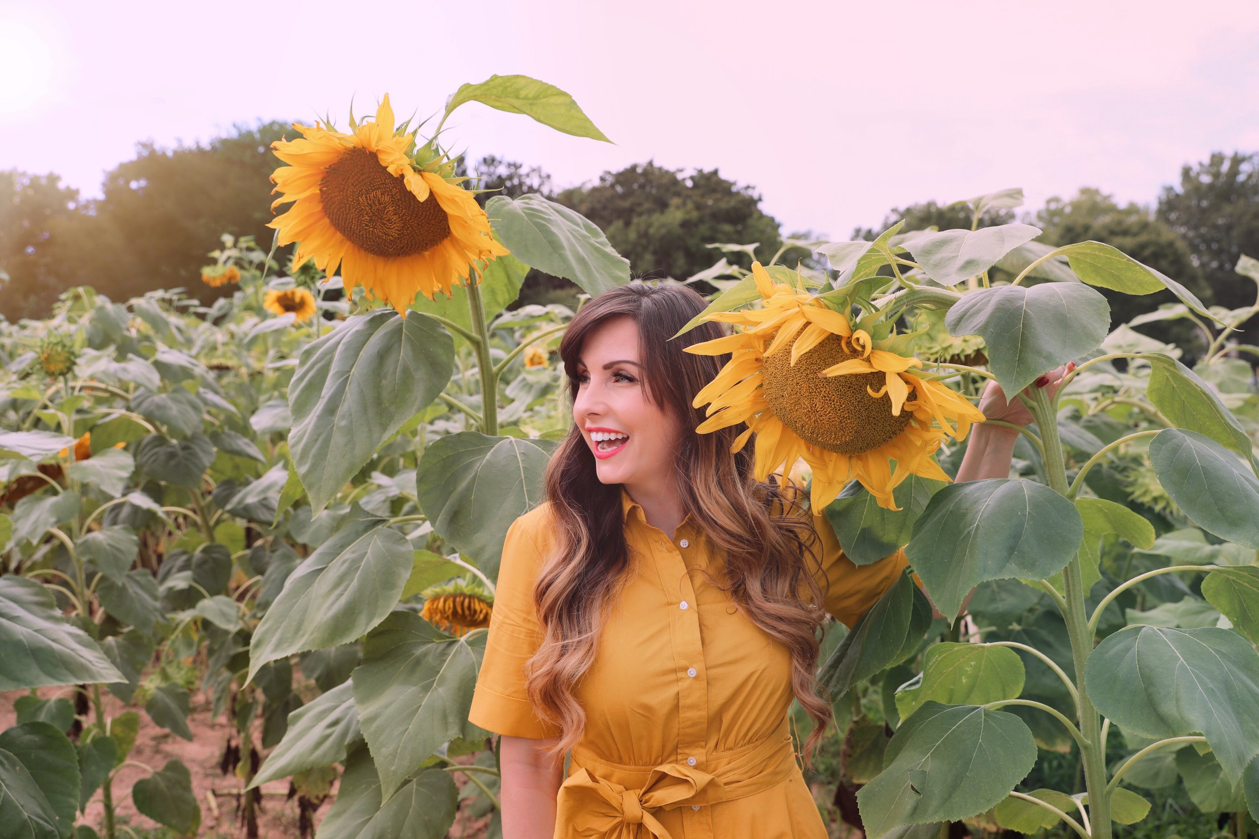 sunflower heaven in North Carolina.jpg