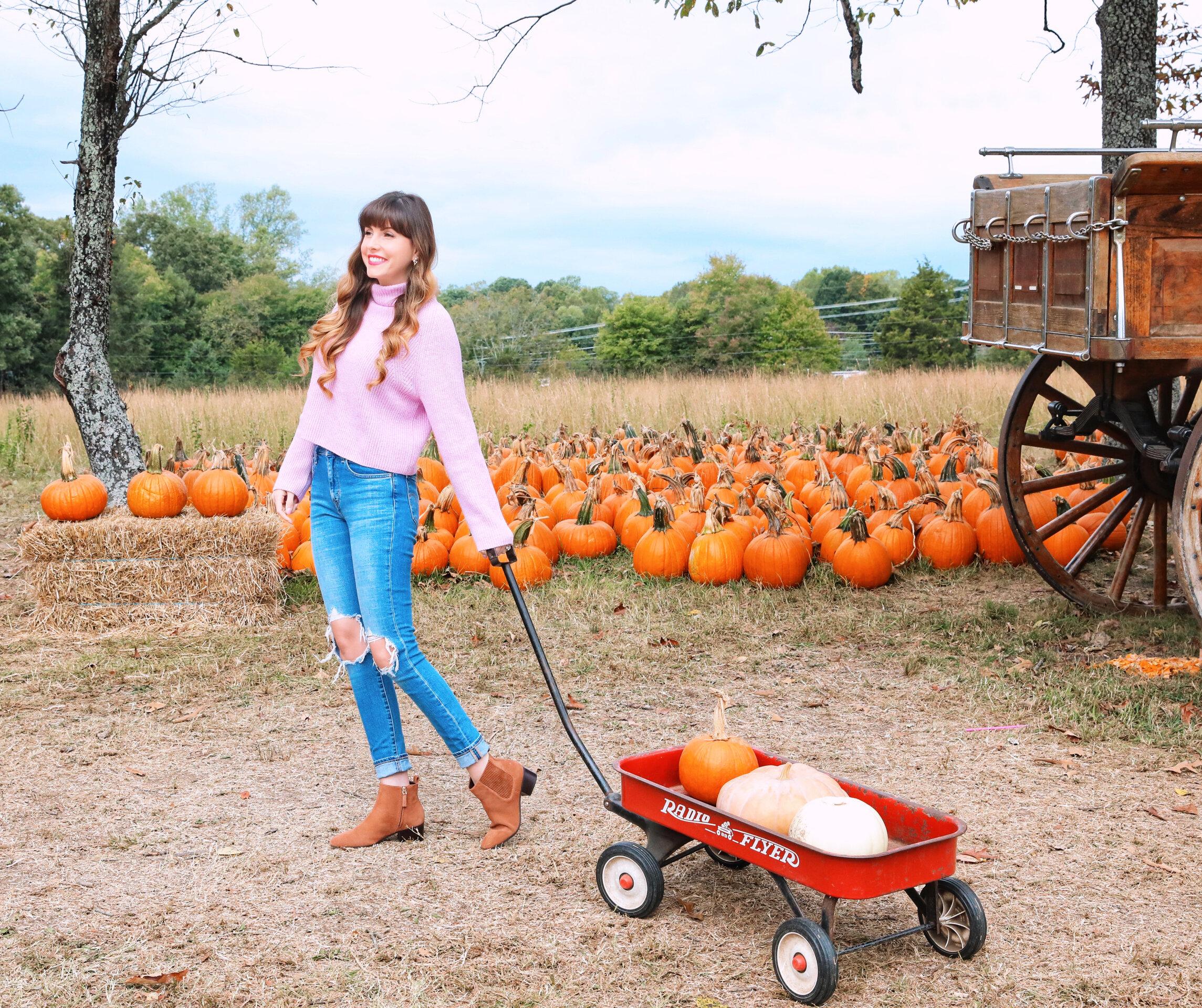 hawks pumpkin patch.jpeg