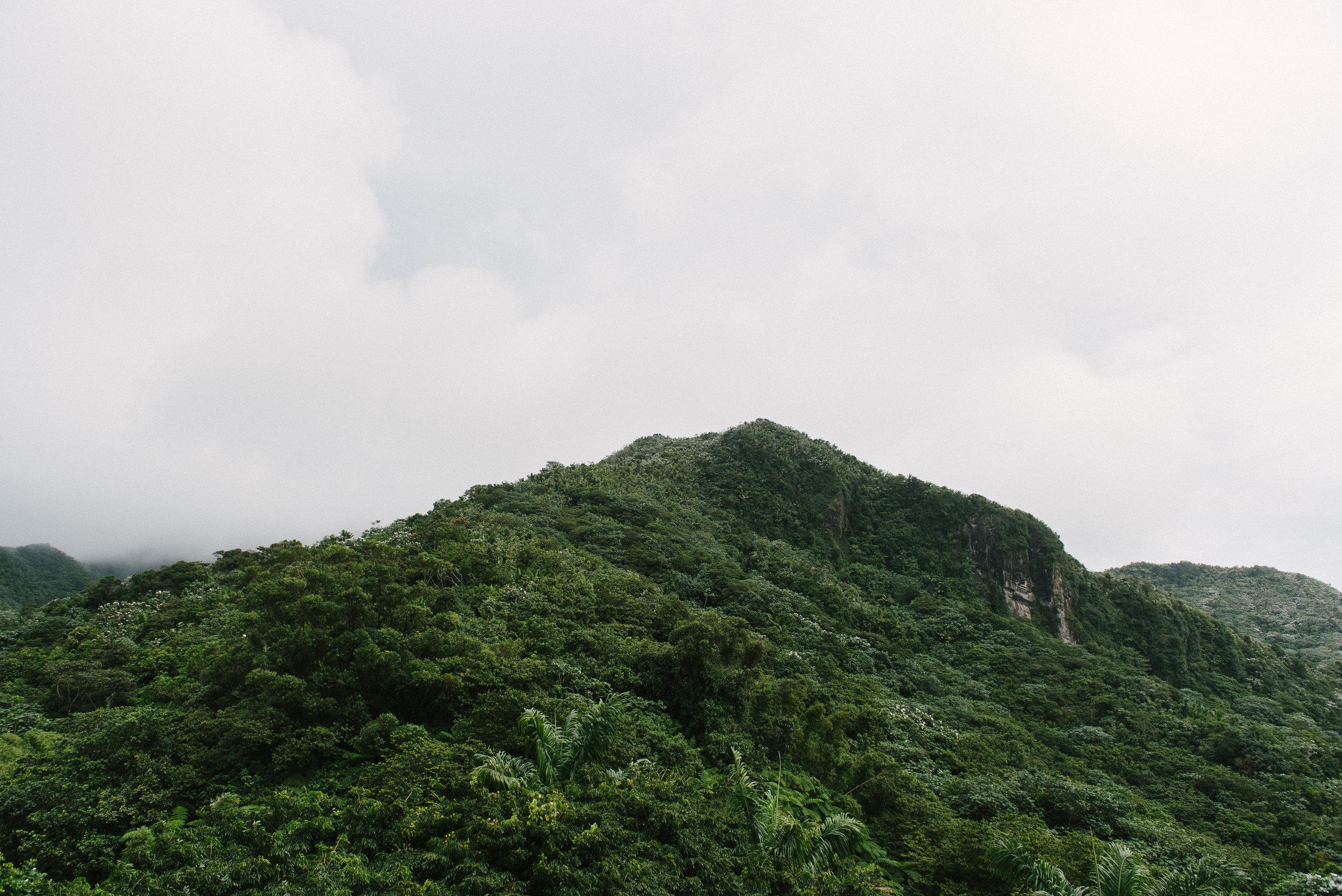 El Yunque (12 of 28).JPG