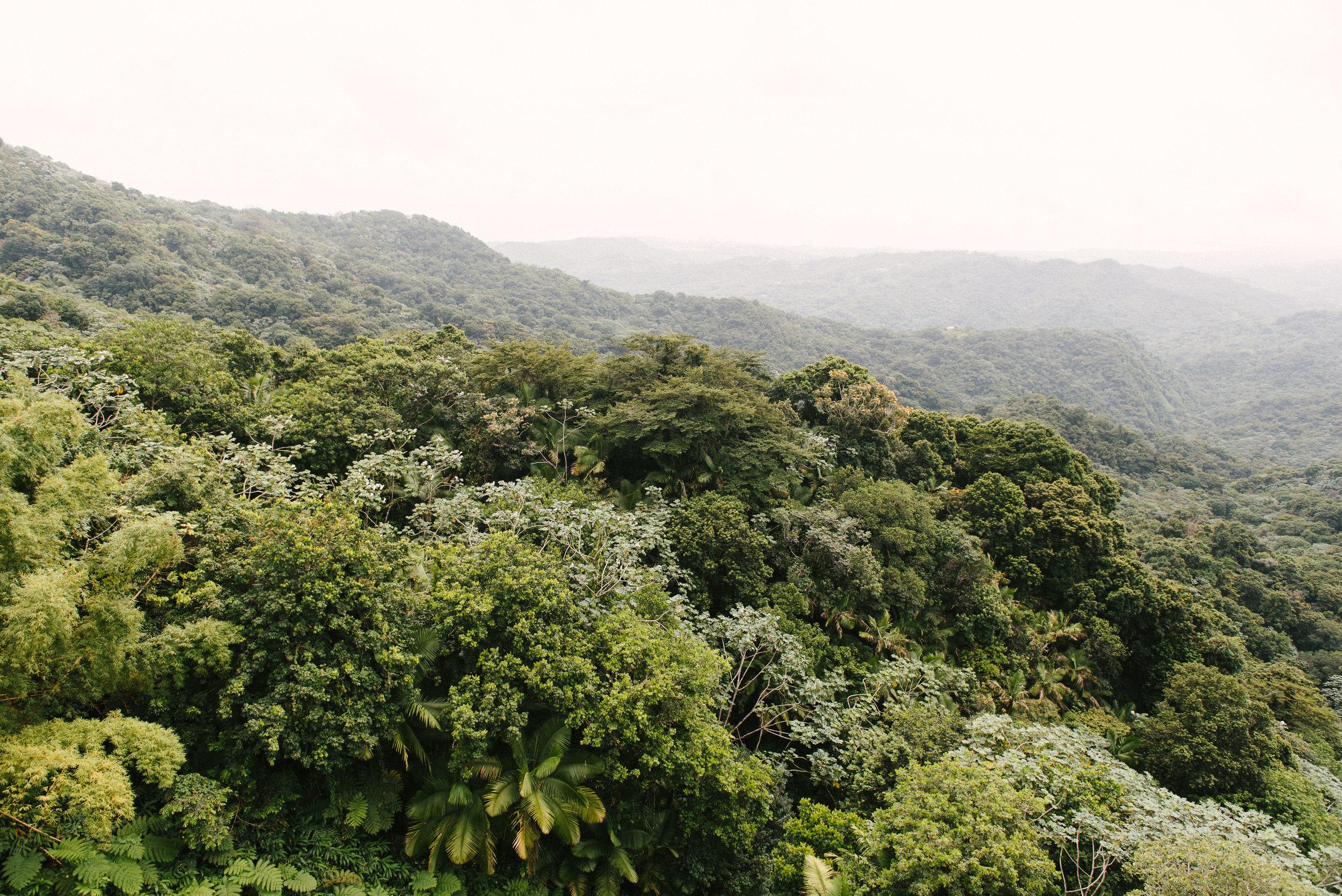 El Yunque (13 of 28).JPG