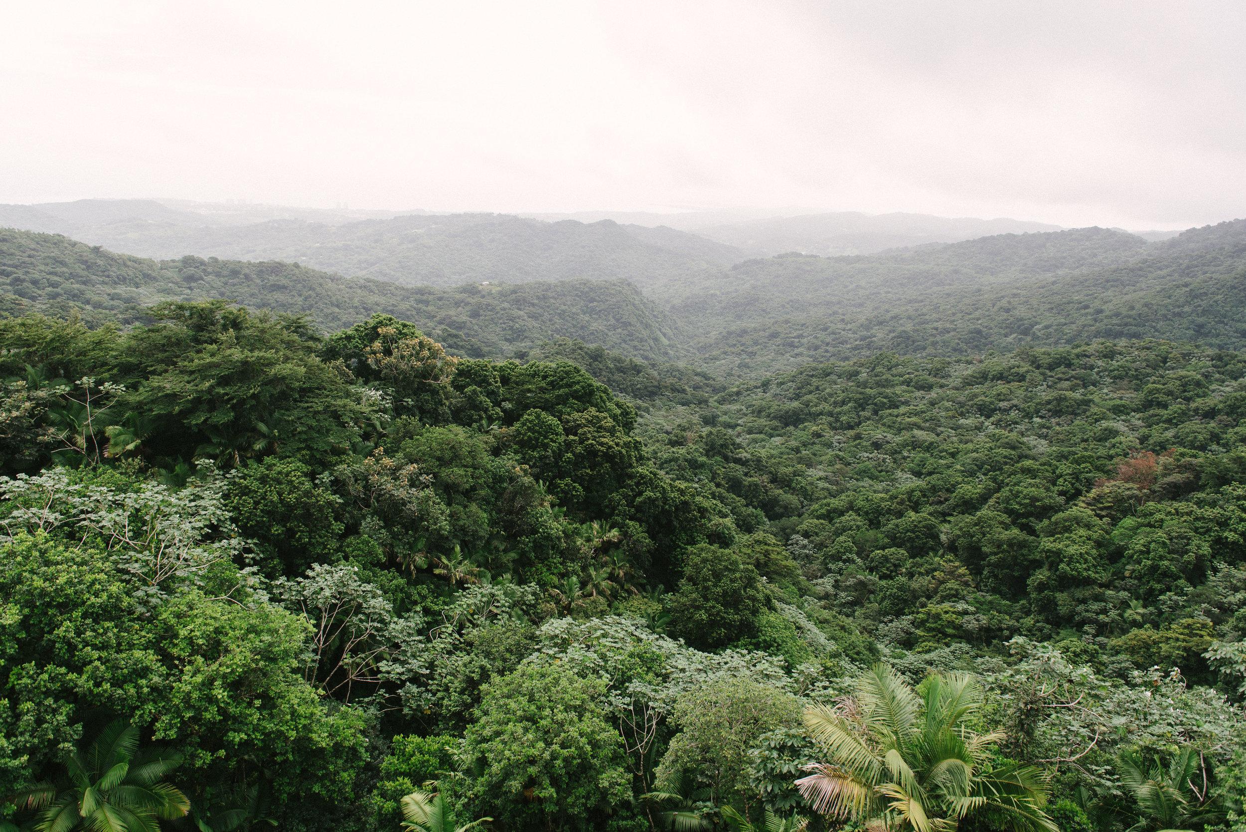 El Yunque (14 of 28).jpg