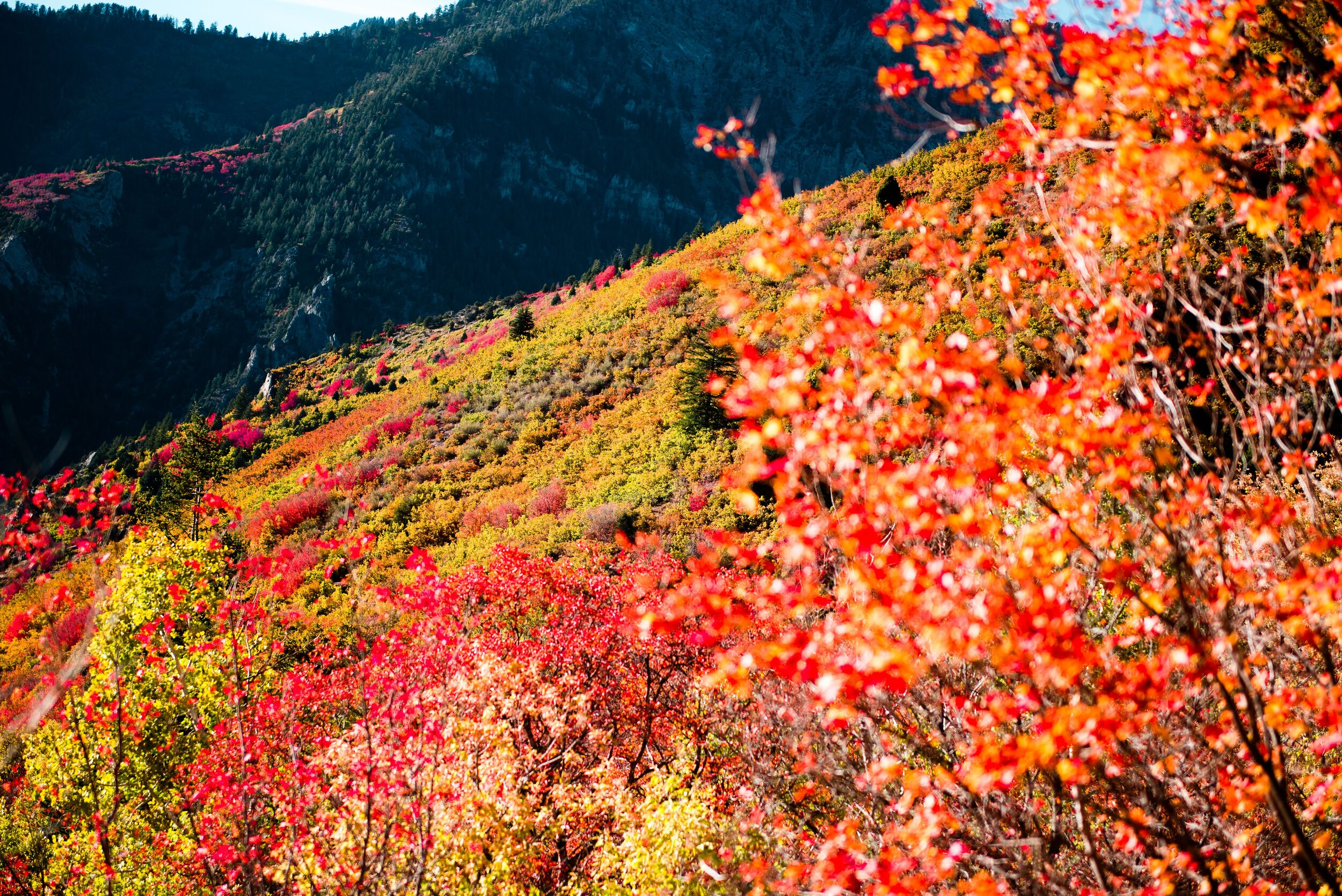 fall17 (14 of 22).JPG