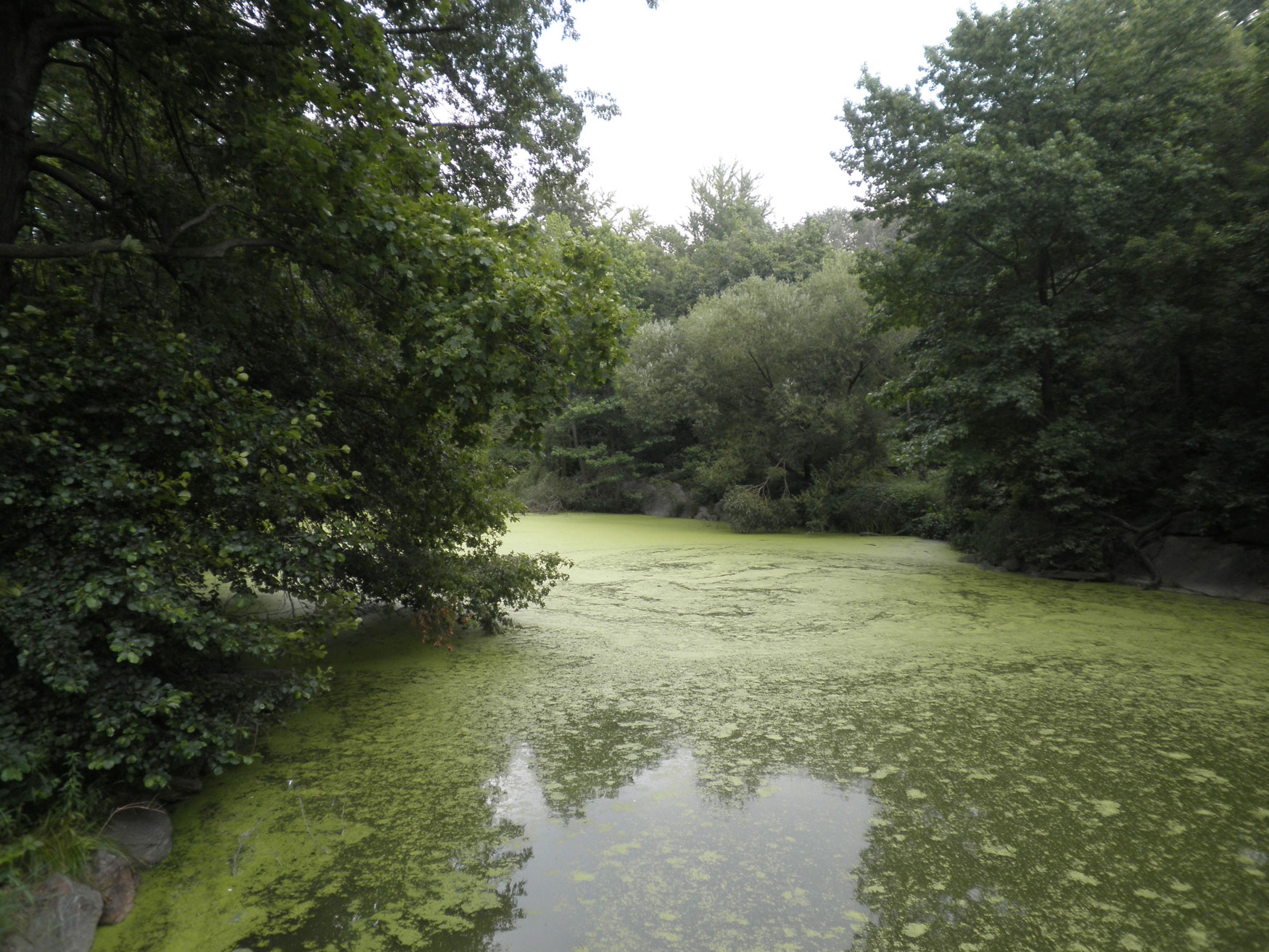 Green lakes in Central Park, New York City