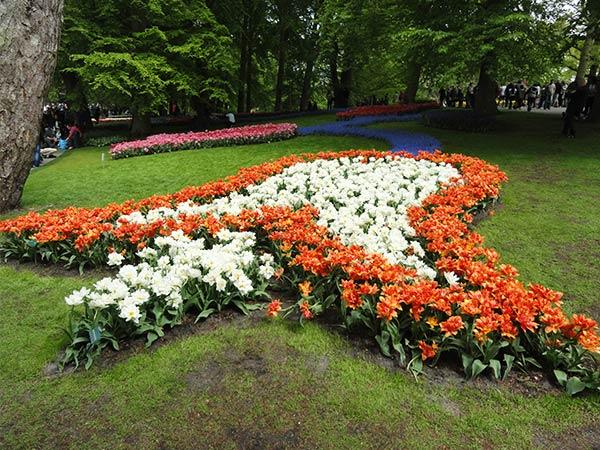 Tulips in the shape of a flower bud in Keukenhof Park