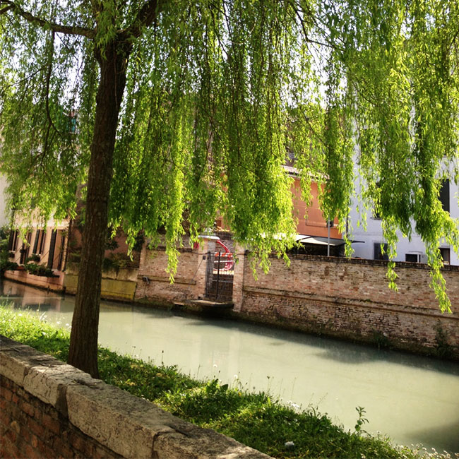 Trees over a canal in Treviso, Italy