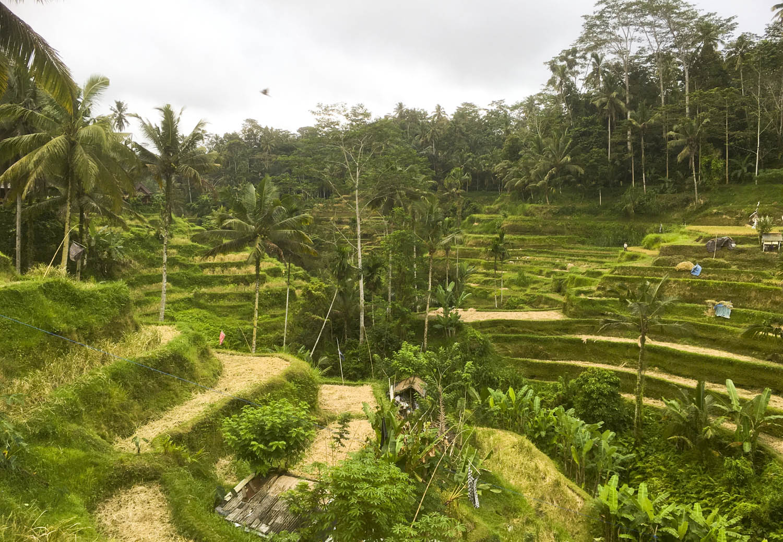 rice-fields-ubud-bali-asia.jpg