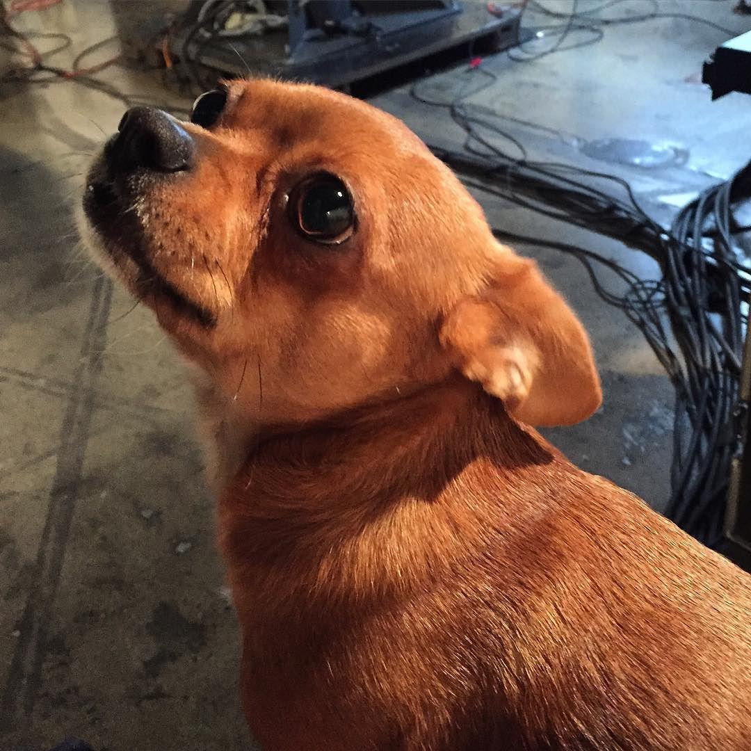Example: fine hound  http://ift.tt/1O0ZspM