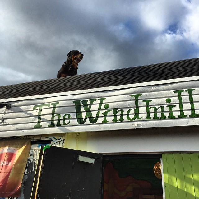The famous #RoofDog at @windmillbrixton. It was a gas again London.  http://ift.tt/1SB6Req