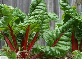 Rainbow Swiss chard  -