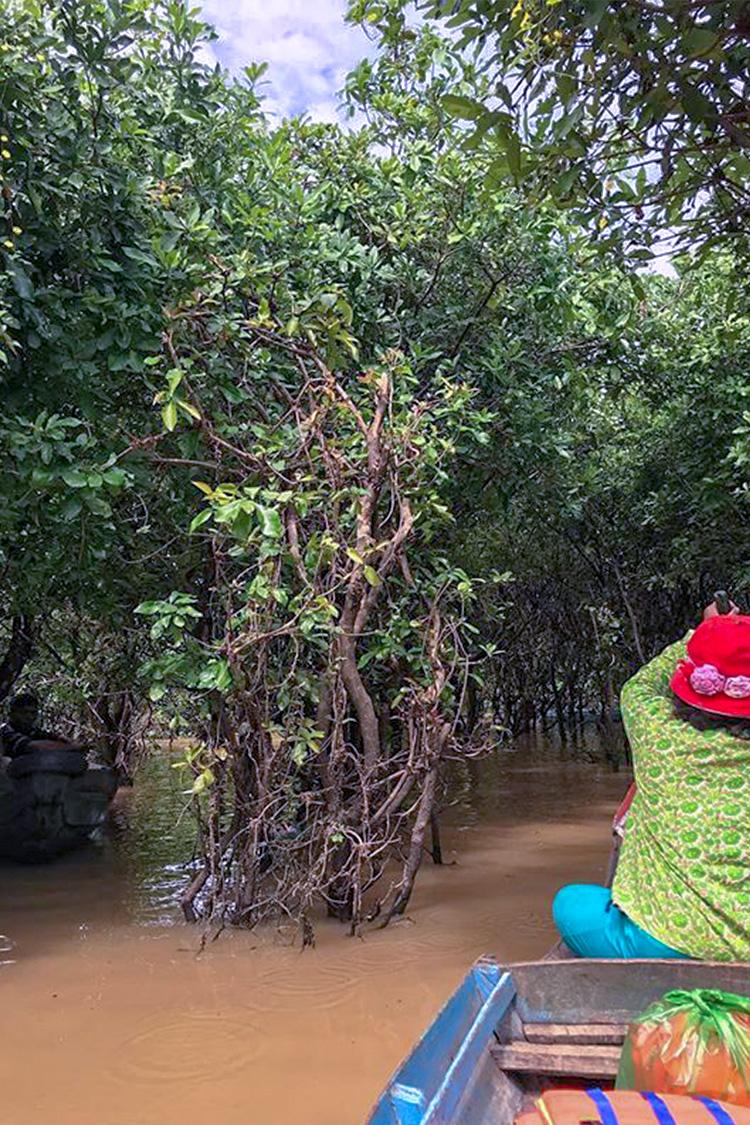 Photo by  VoyageVixen2  - Mangroves, Kep