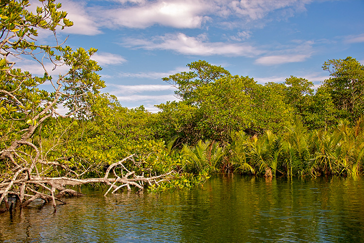 Photo by  Marc Uhlig , Mangroves, Kep