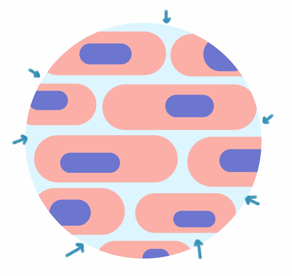 The extracellular matrix (ECM)
