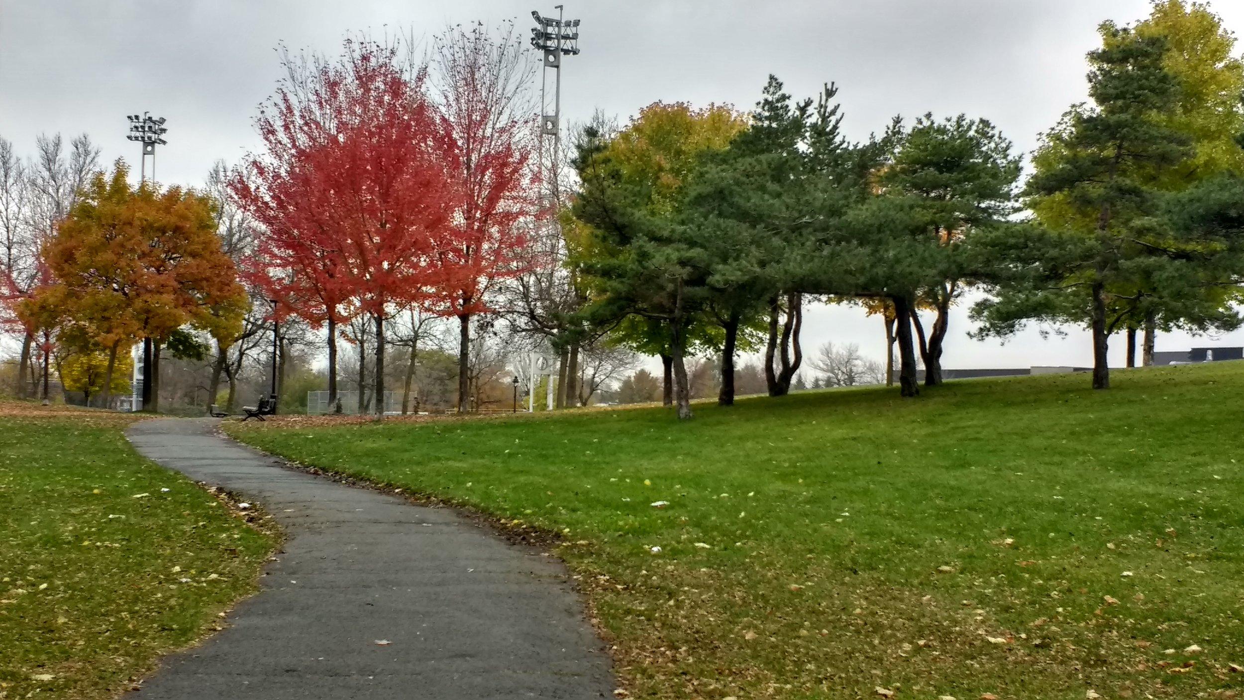 Local park still has the Autumn colours