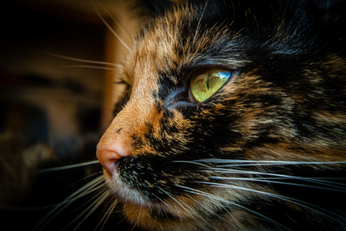 Cat Photo by Brian Wolski