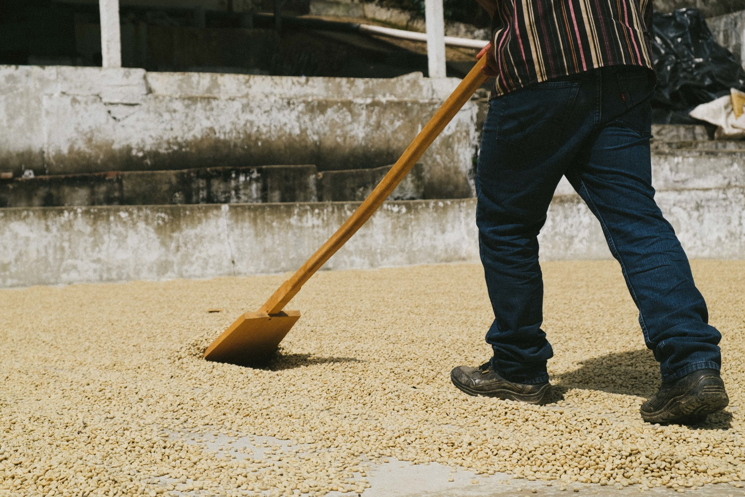 Turning the coffee parchment during the drying process is necessary to ensure even drying over prolonged period