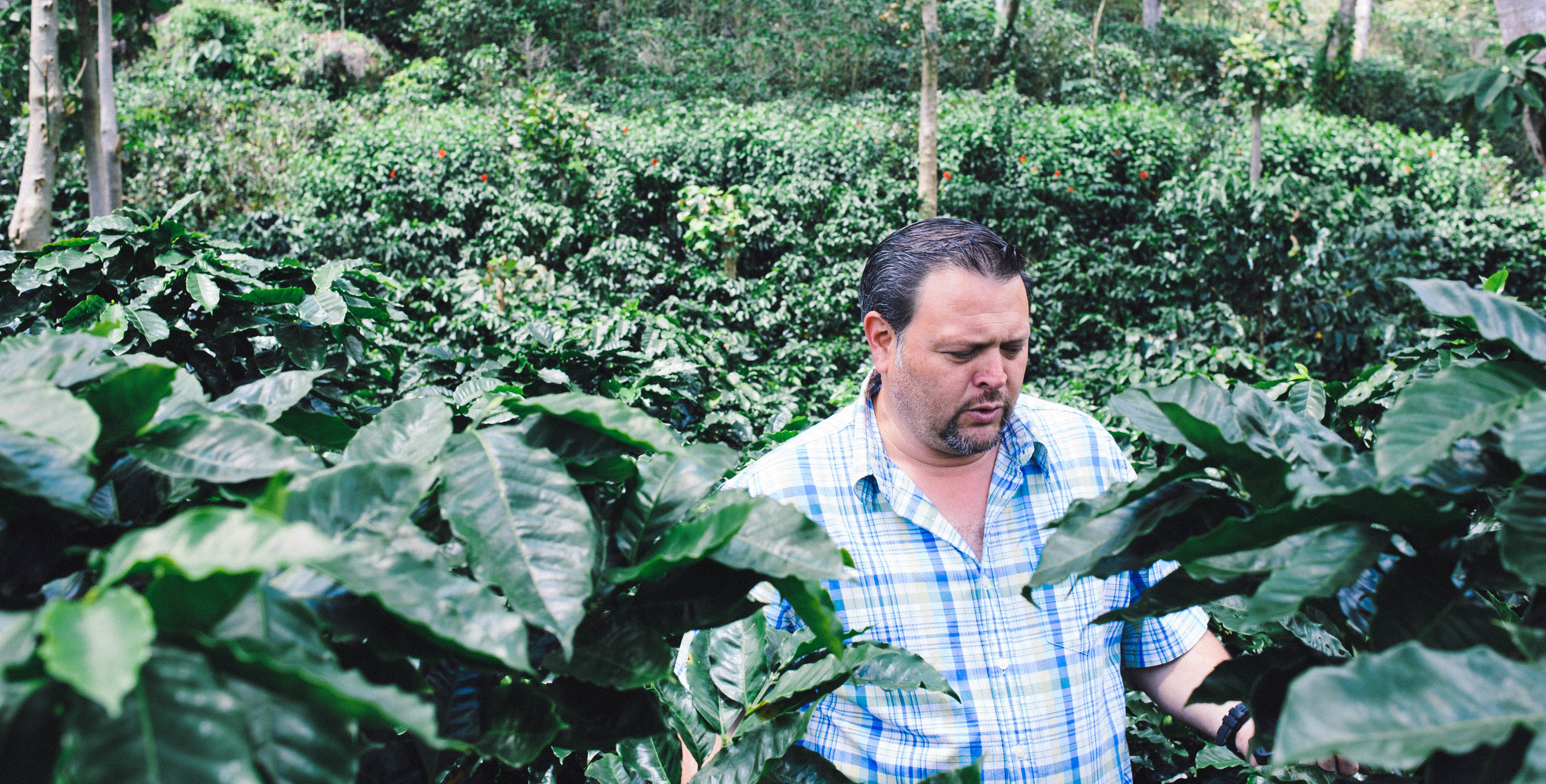Erwin Mierisch and his coffee trees