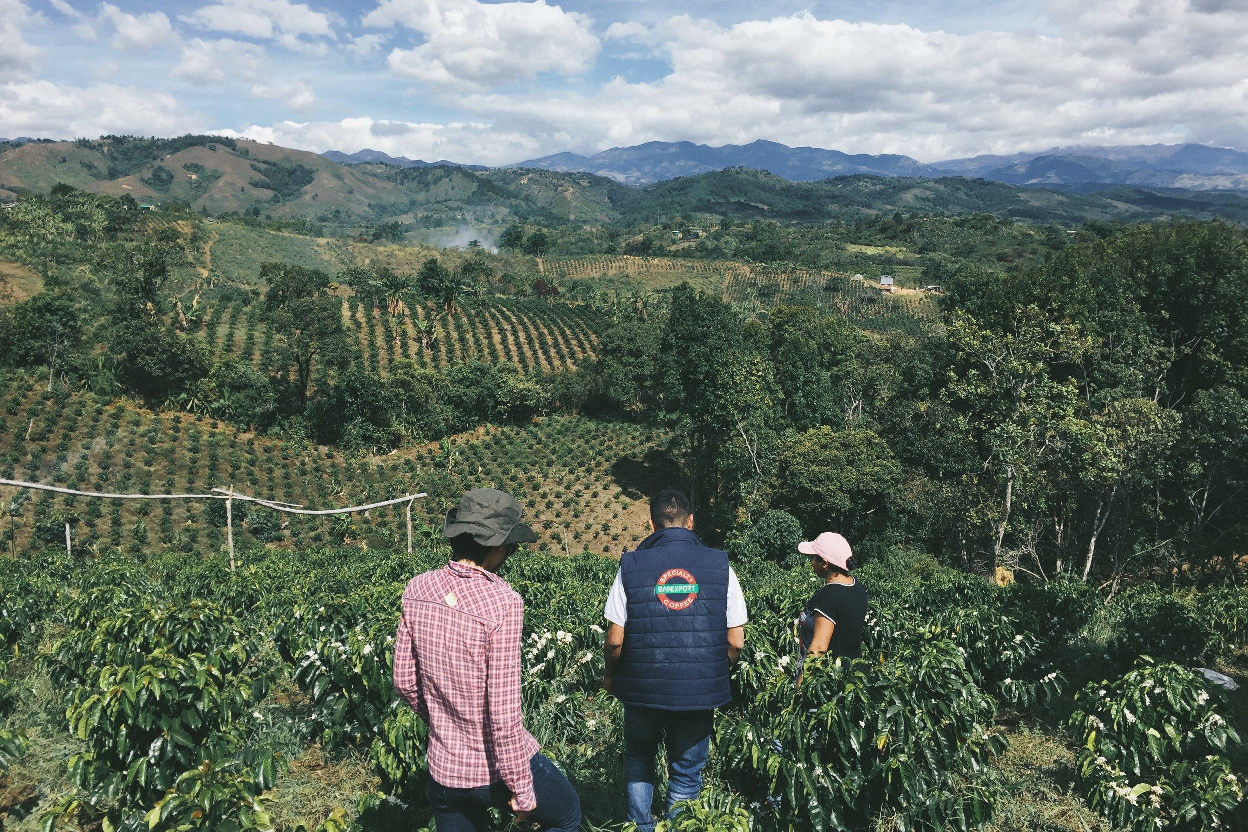 Walking the farm, La Esperanza with Cenaida Flor and Aldemar.