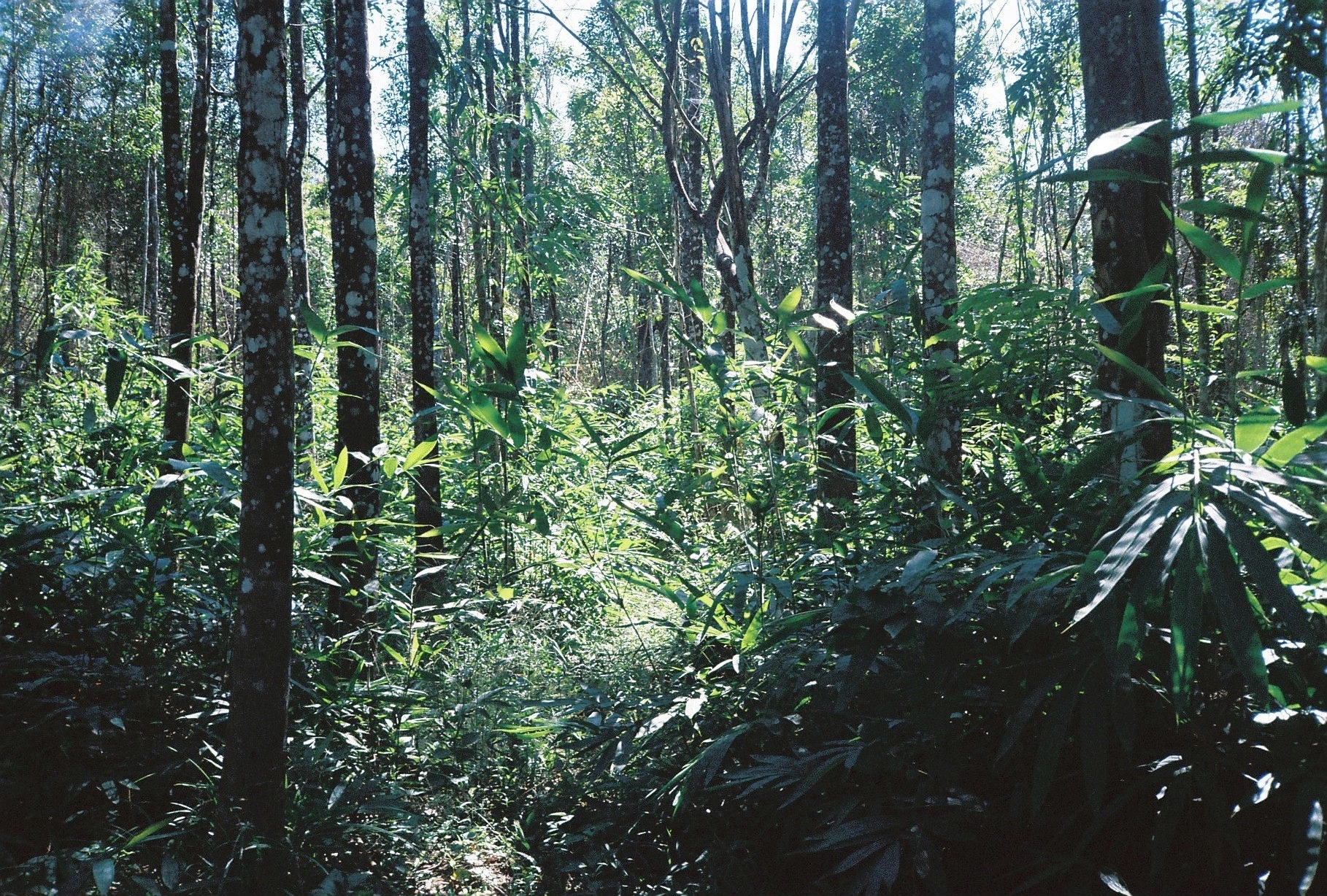 Sustainably managed plantation, Southern Vietnam - the source of our Agarwood incense