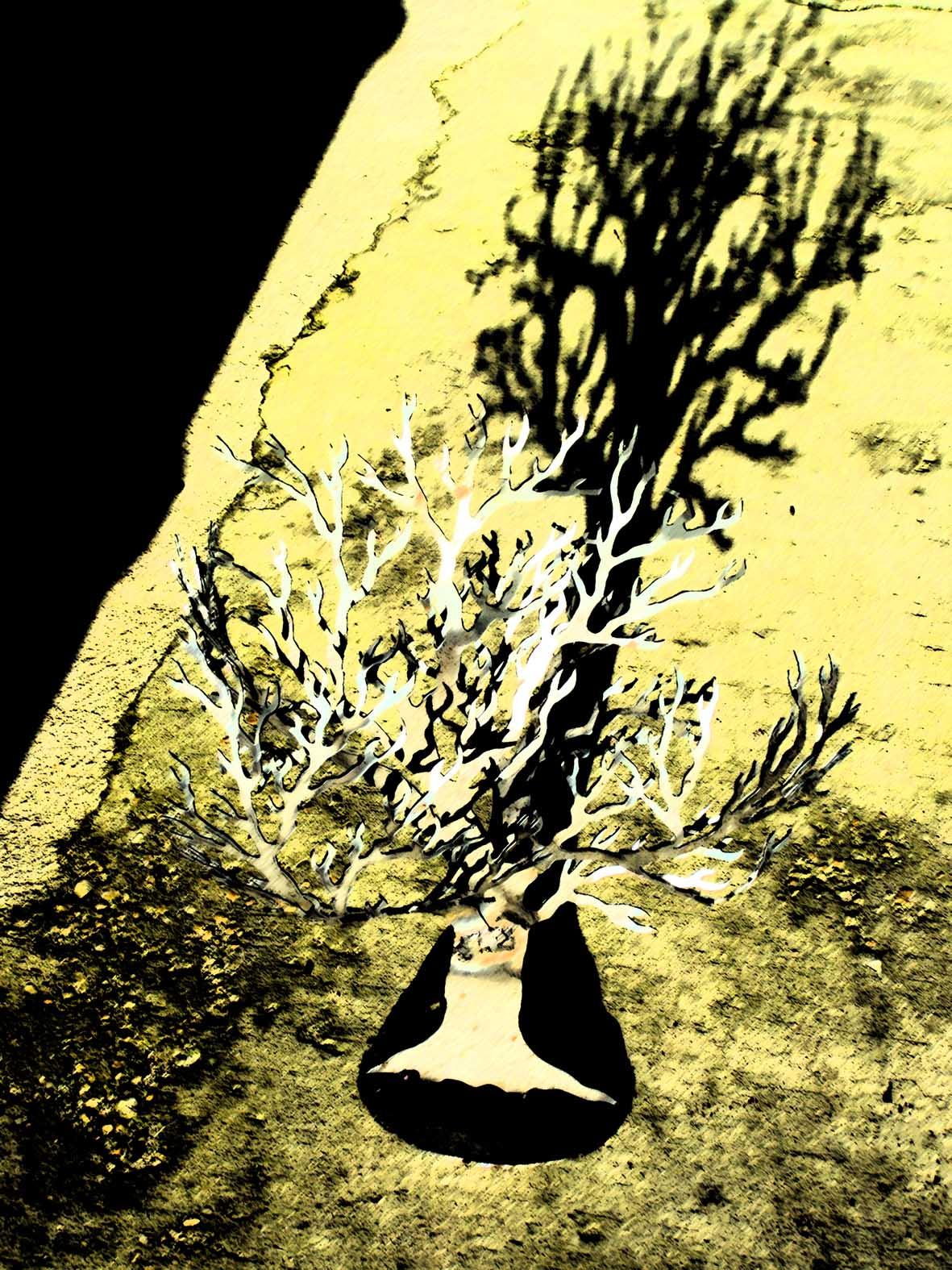 ARBRE FLIPPO ombre.jpg