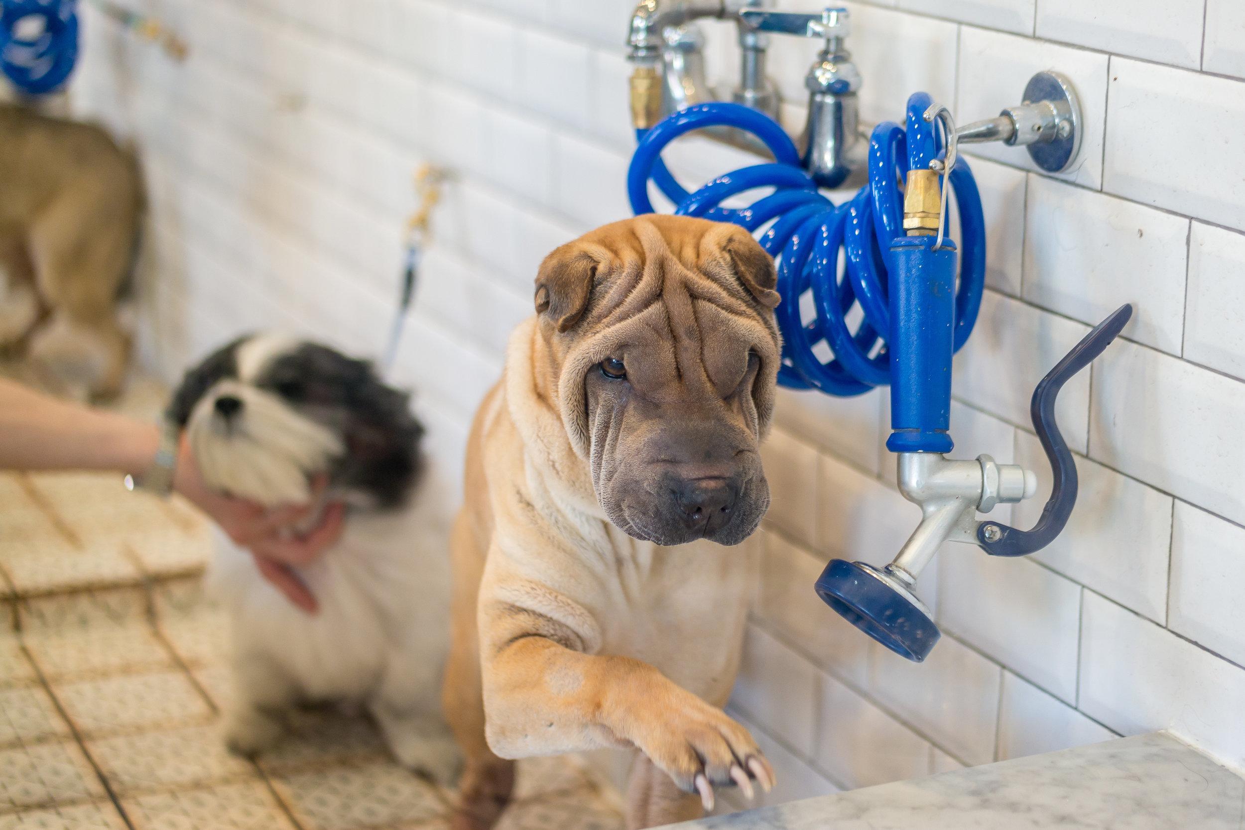 Dog+Wash'n+Go+Bed+Stuy-69.jpg