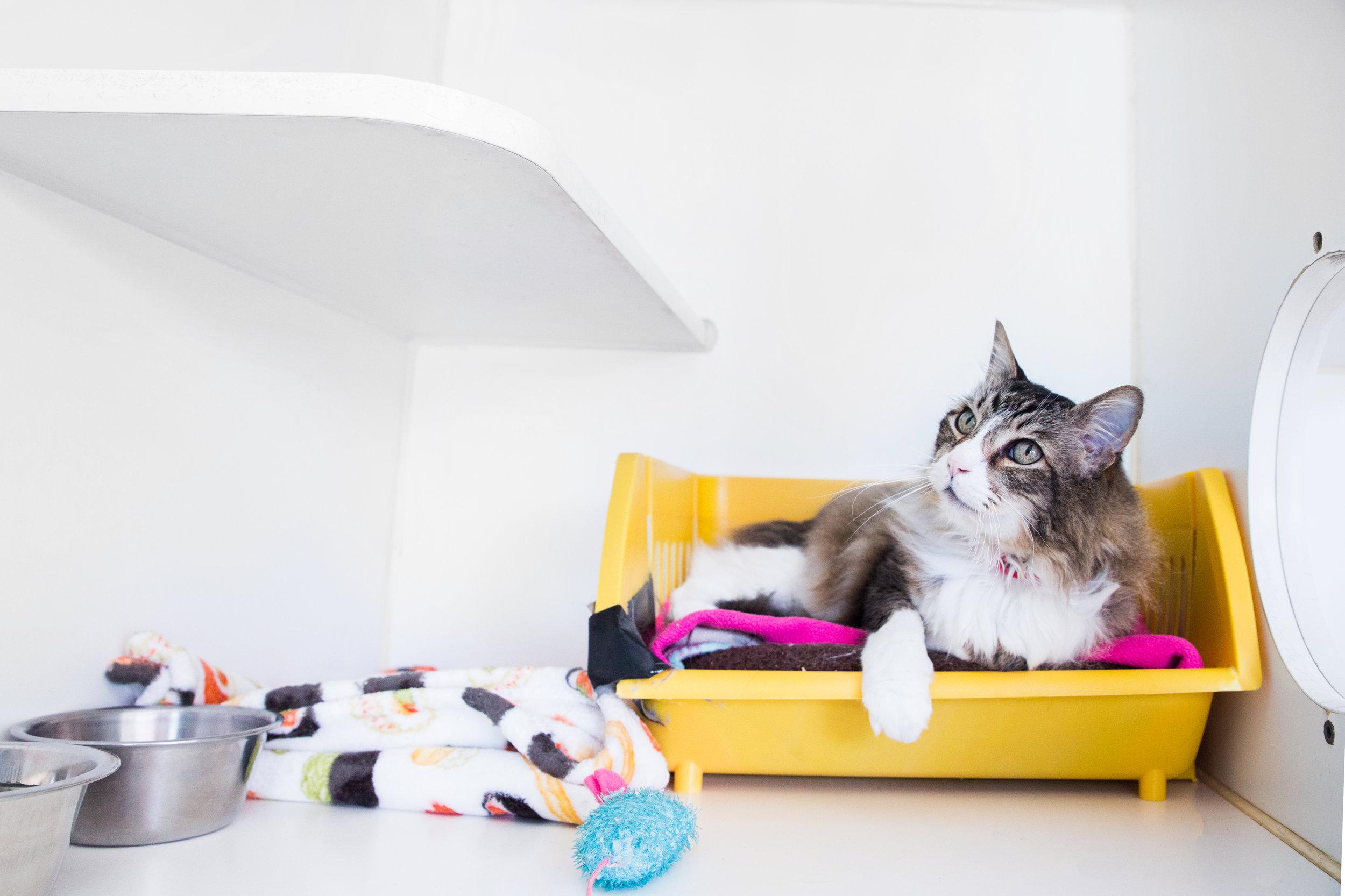 Townhouse Pet Care Cat 2.jpg