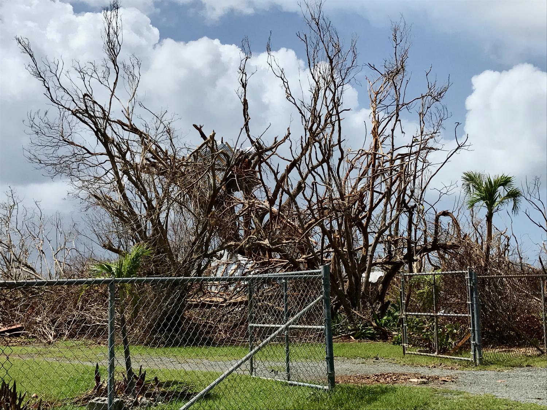 Hurricane Maria's version of fall