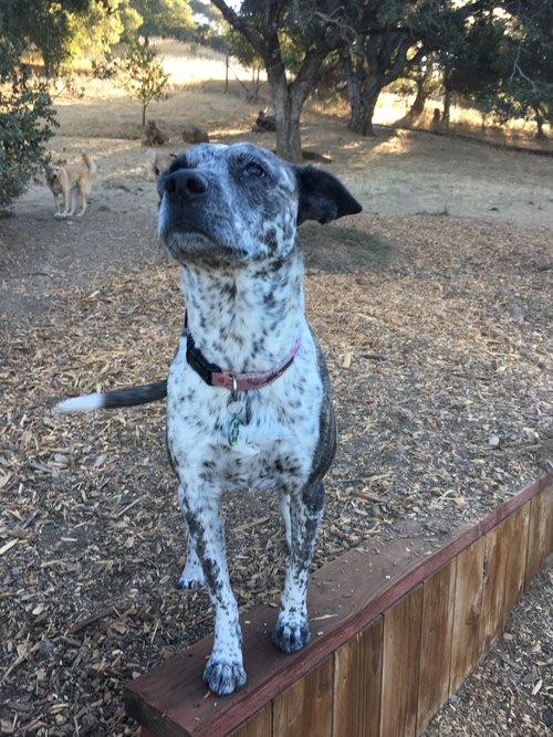 San Francisco & Marin Dog Boarding — Wags