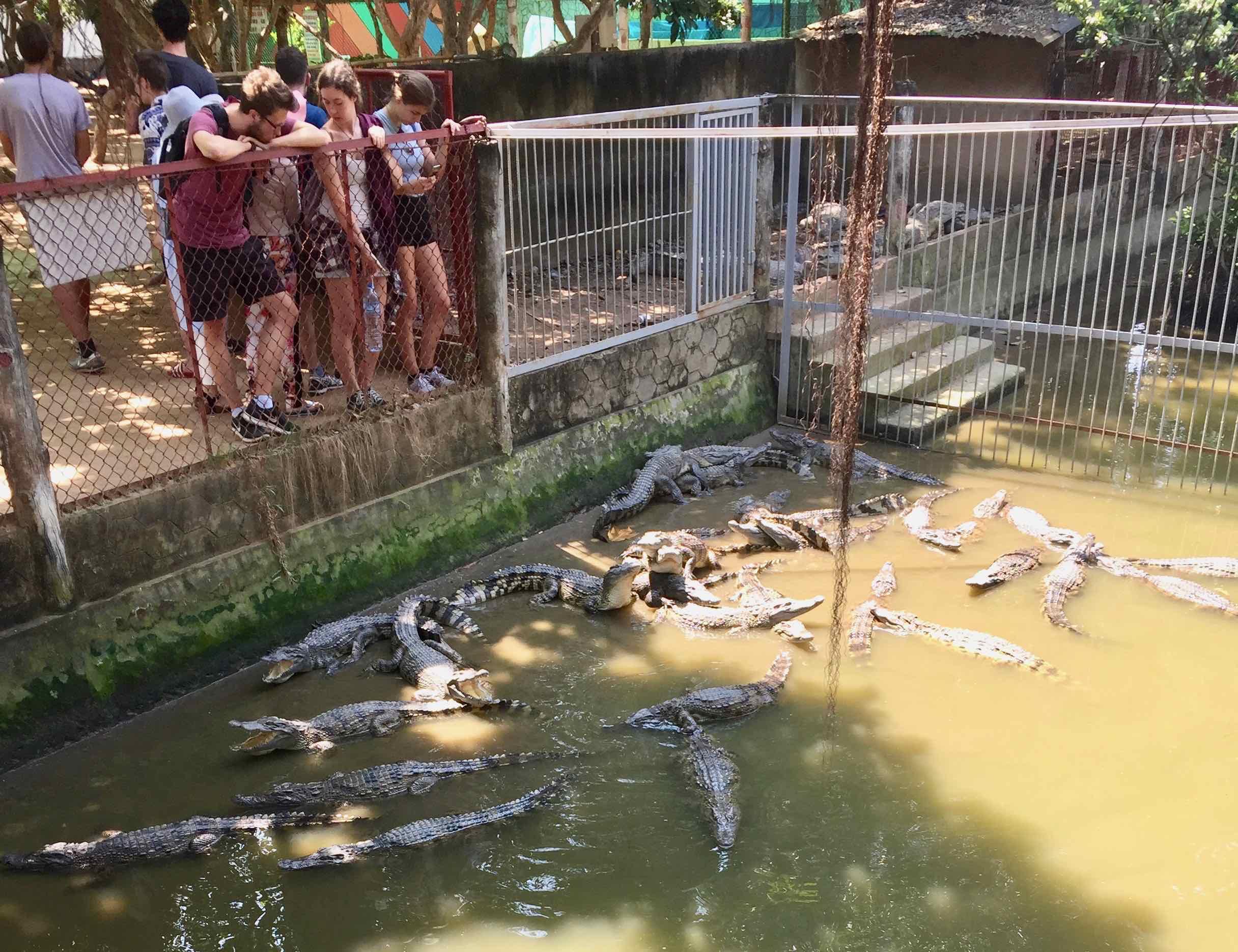 doucette_vietnam_crocodilepen.jpg