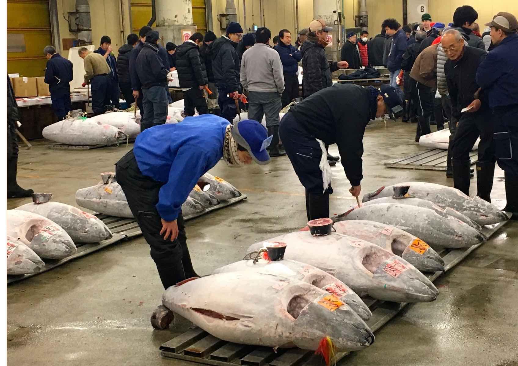 Japan tuna Coyle (1).jpg