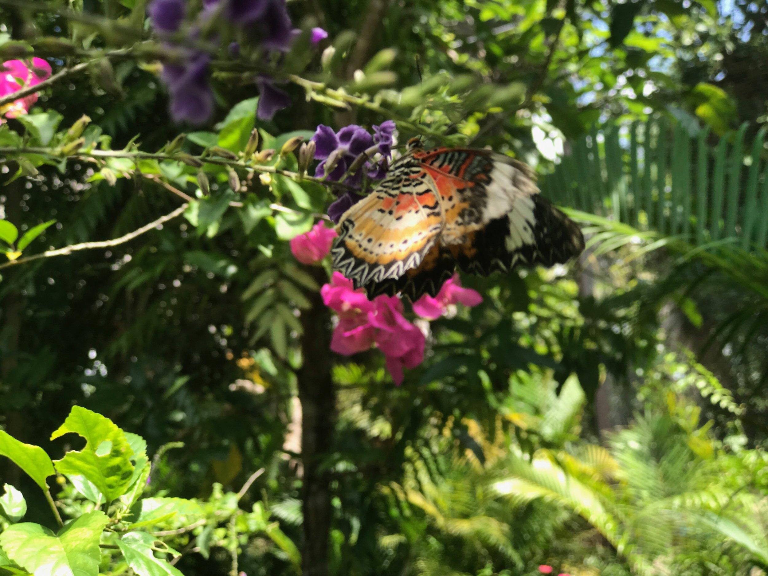 Butterfly02.jpeg