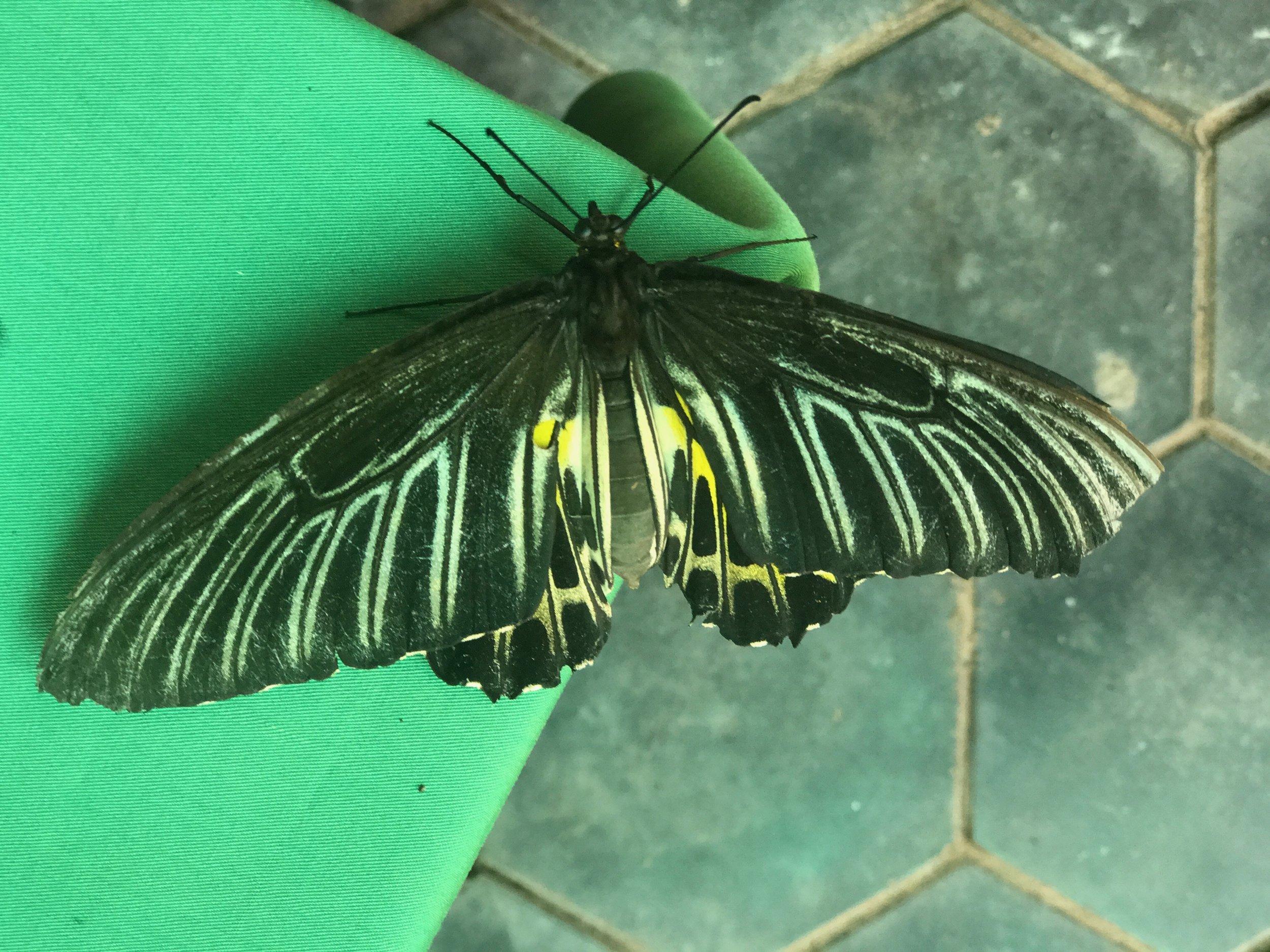 Butterfly03.jpeg