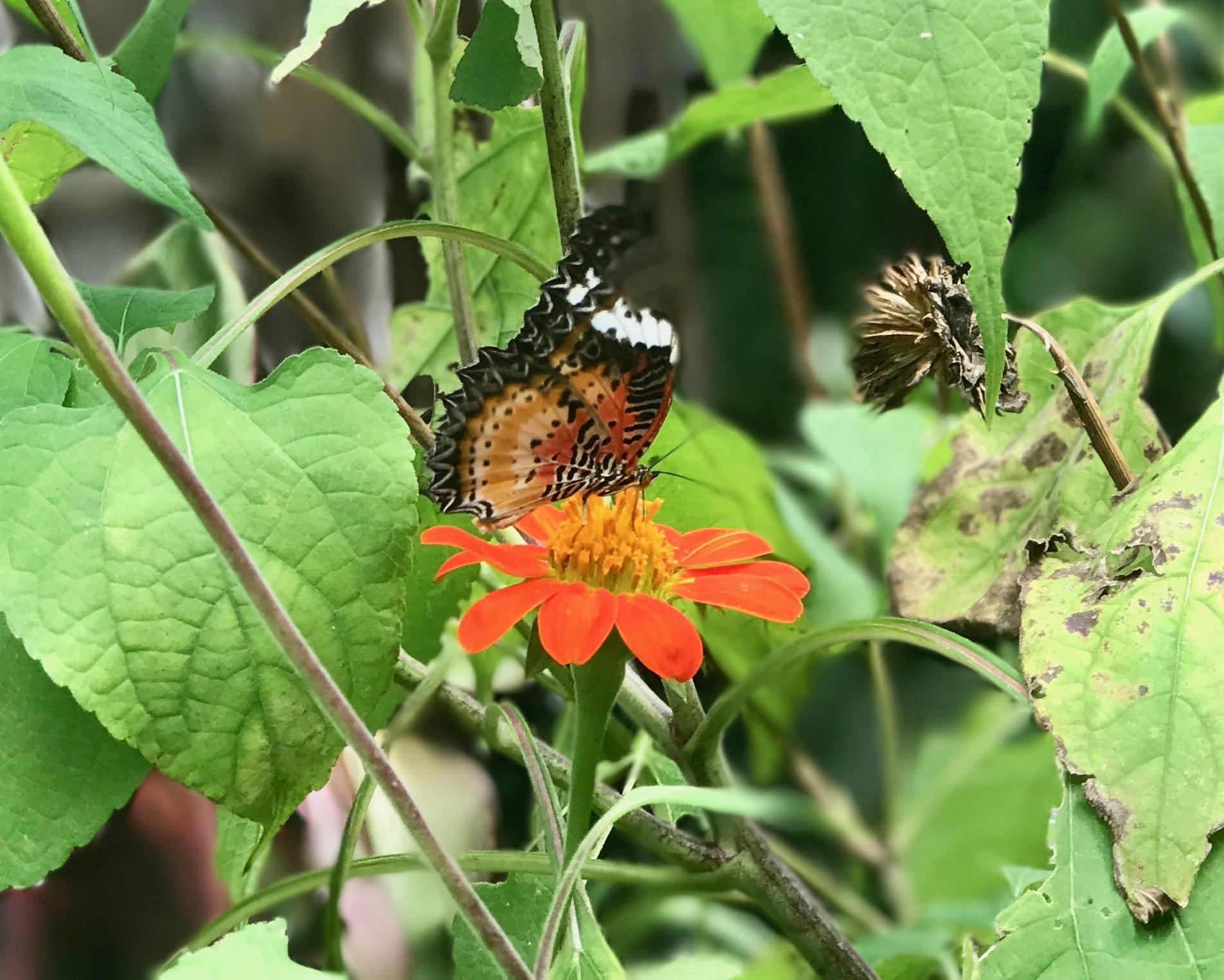 Butterfly04.jpeg