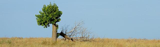 Tree-rebirth.jpg