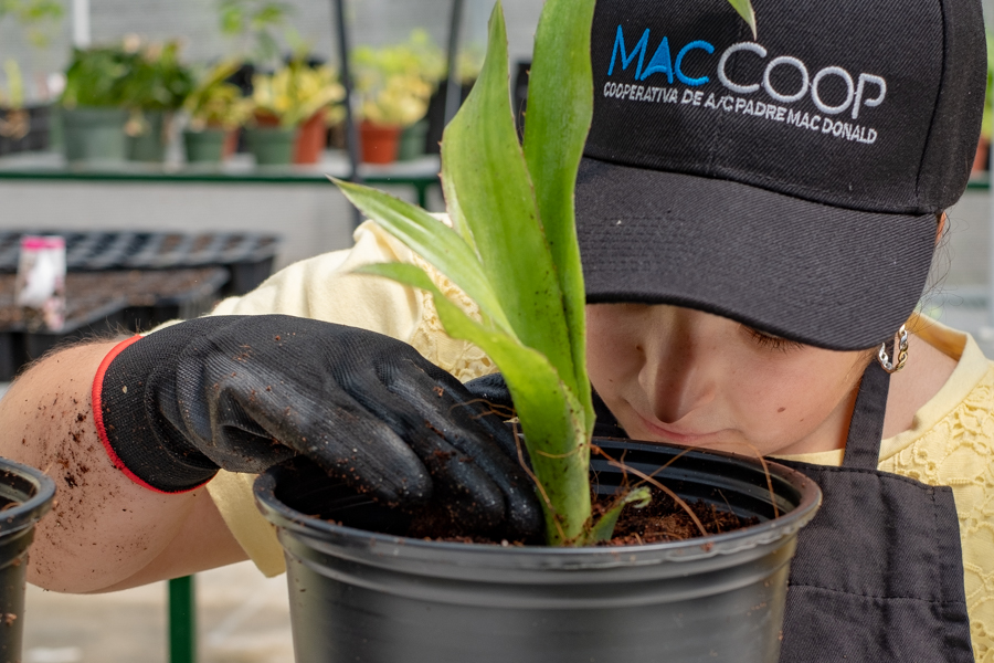 Planting an orchid